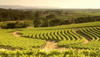Langhorne-Creek wineries