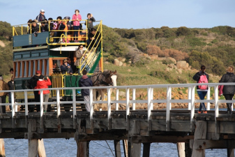 Horse Drawn Carriage - Victor Harbor