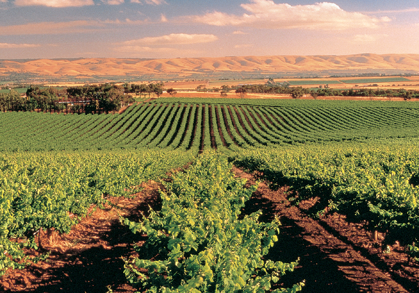 Vineyard Mclaren Vale Adelaide Chauffeur And Tours